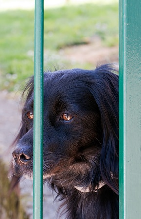 Cane rinchiuso ed abbandonato nel giardino