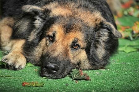 cane conati di vomito