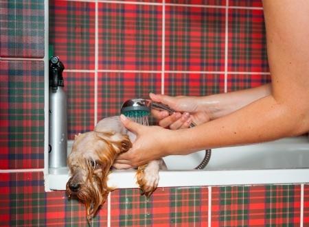 bagnetto al cane