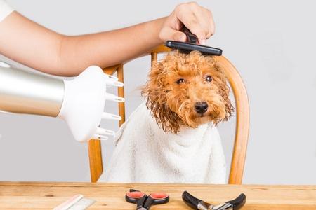 Asciugare il cane