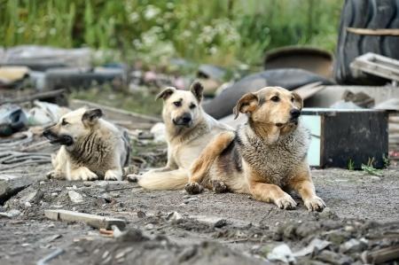Cani randagi i Mosca
