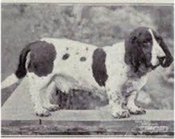 Basset Hound nel 1915