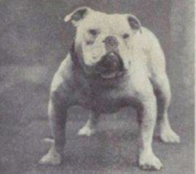 Bulldog nel 1915