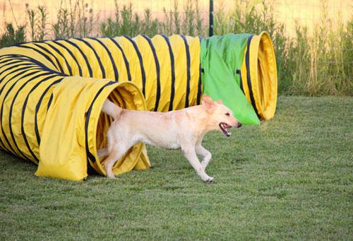 Earthdog Trials