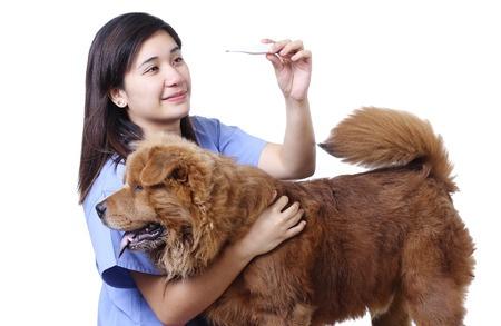 Misurare la temperatura al cane