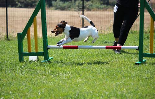 Terrier Trials - gare di velocità cane