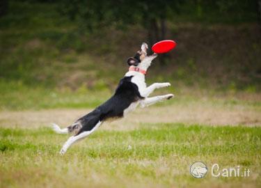 giochi da riporto per cani