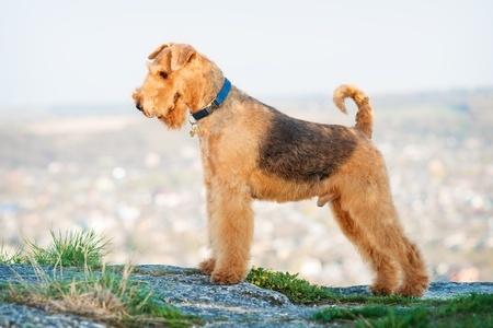 Peso ideale del cane