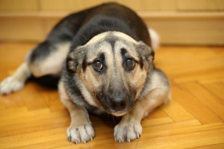 I cani percepiscono le nostre intenzioni
