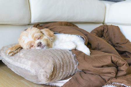 cane che dorme sui cuscini