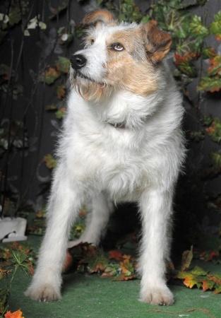 i cani comprendono quando vengono trattati ingiustamente