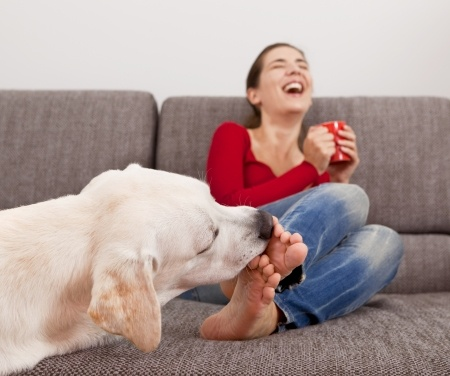 How Can I Stop My Dog From Licking The Floor