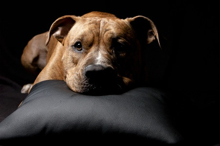 i cani comprendono una persona in lutto
