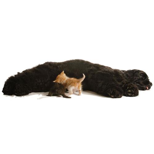 I cani adottano anche animali di altre razze