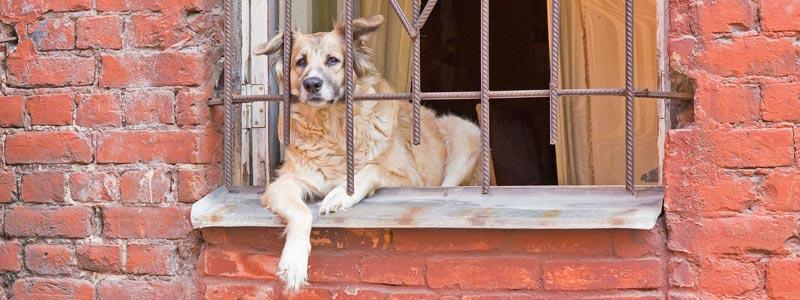 Cane che attende il padrone alla finestra