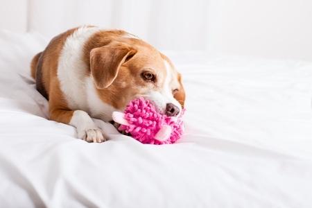 Disturbo compulsivo: cane con giocattolo