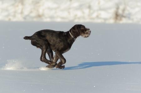 Cane che rincorre la sua ombra