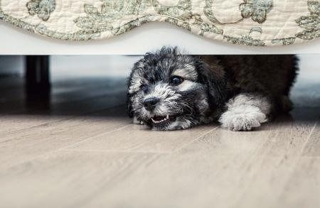 Cane protezione della casa