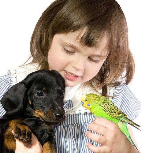 Bimba, cane e uccellino
