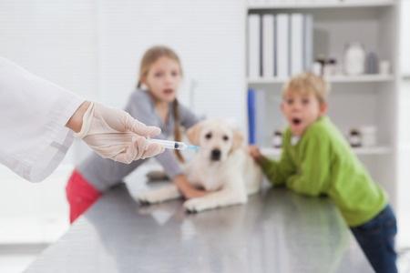 cane paura del veterinario