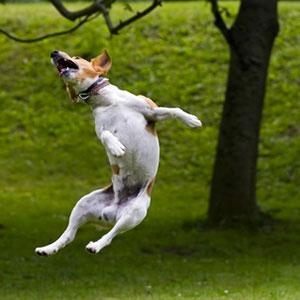 Record salto in altezza cane Cindarella May
