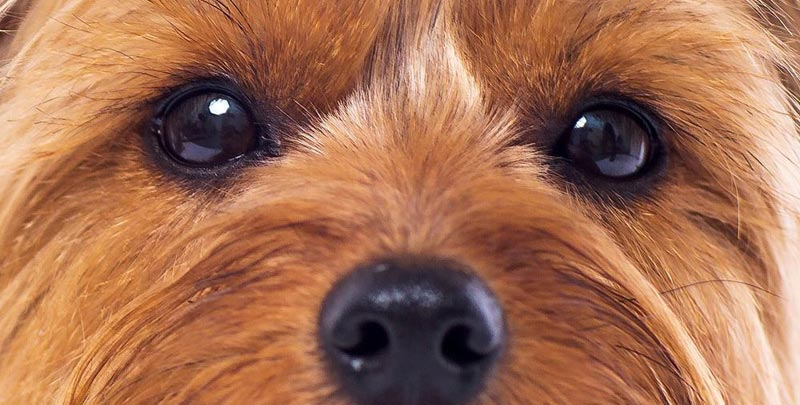 Cosa ci dice il cane con lo sguardo