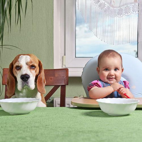 Mangiare sempre in compagnia