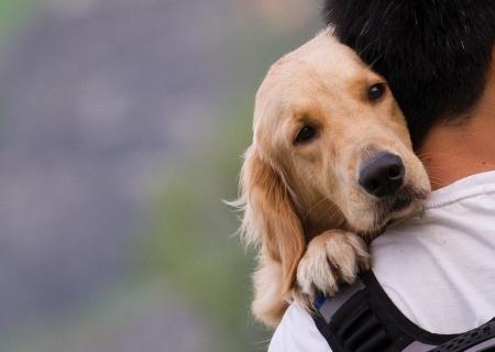 cane miglior amico dell'uomo