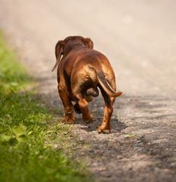 cane perso torna a casa da solo