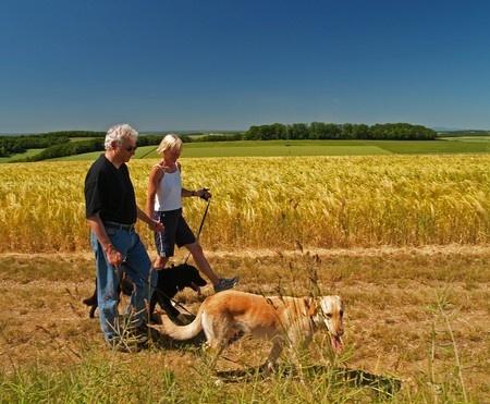 I cani favoriscono le interazioni sociali