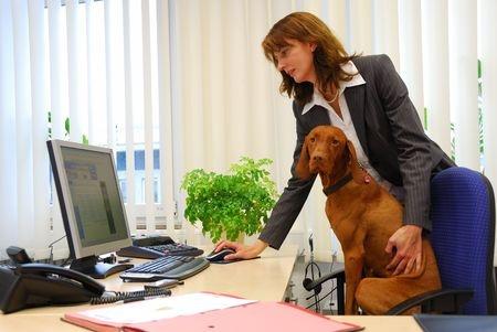 Cane migliora le iterazioni tra colleghi a lavoro