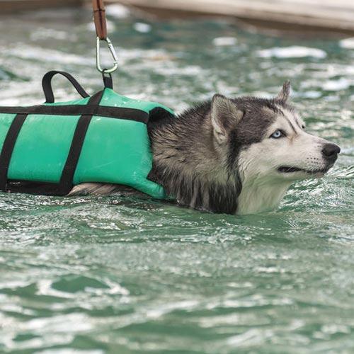 Perché alcuni cani non riescono a nuotare?