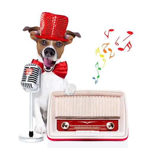 Quale musica piace ascoltare al cane