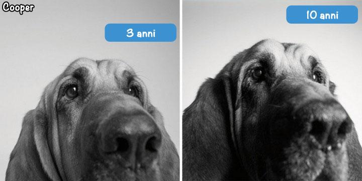 cooper cane 3 anni, 10 anni