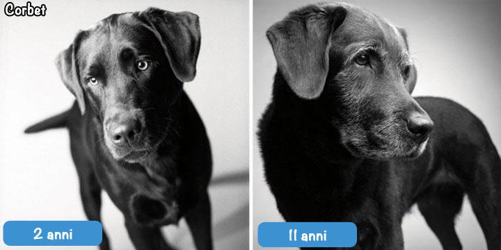 corbet - cane 2 anni, 10 anni
