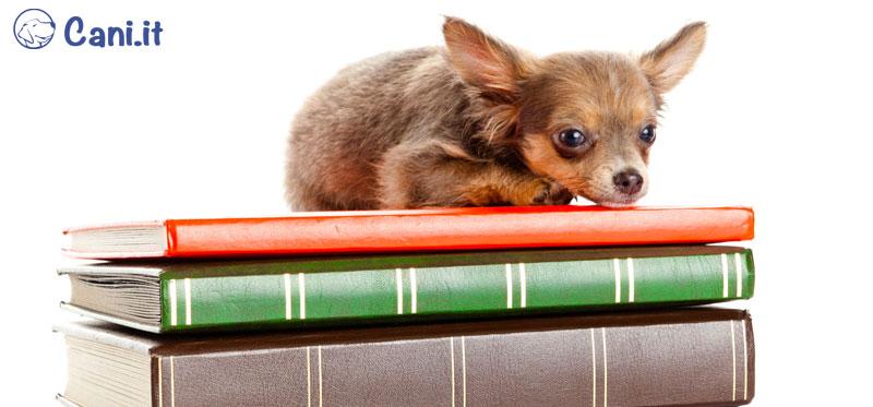 Libri sull'educazione e addestramento del cane