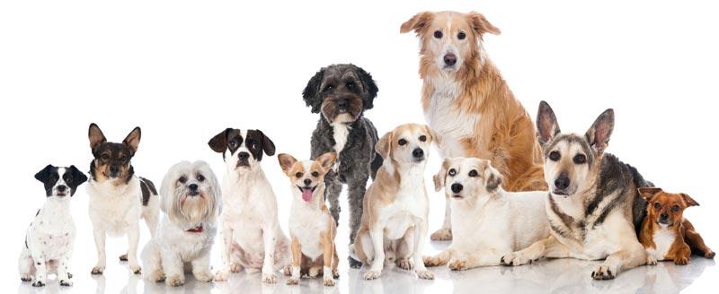 Diverse razze di cane