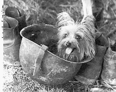 La storia di smoky il primo Yorkshire Terrier da terapia