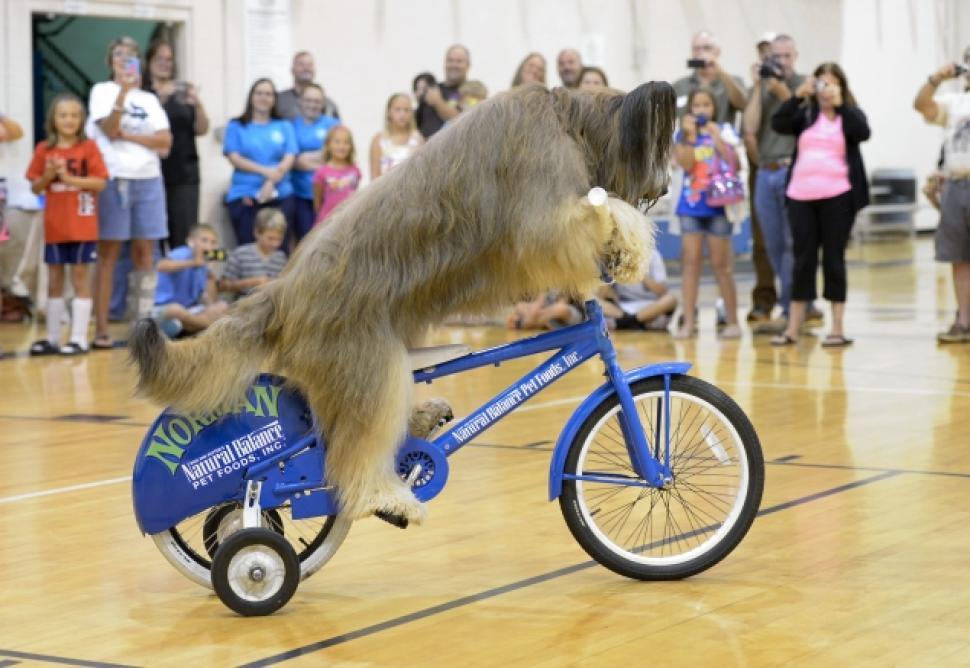 cane ciclista record