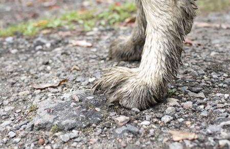 Zampe del cane pulizia