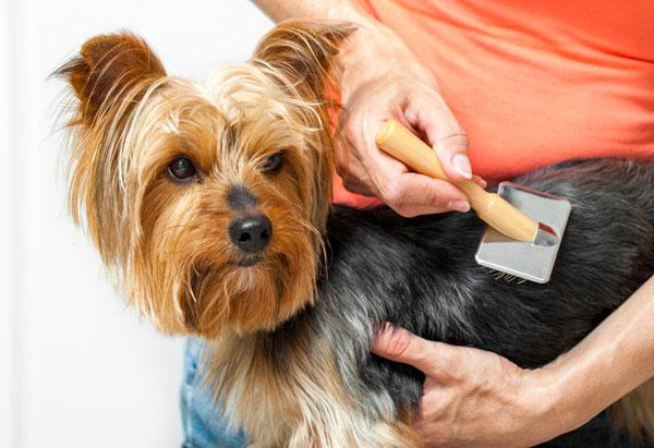 cura del pelo in estate - cane