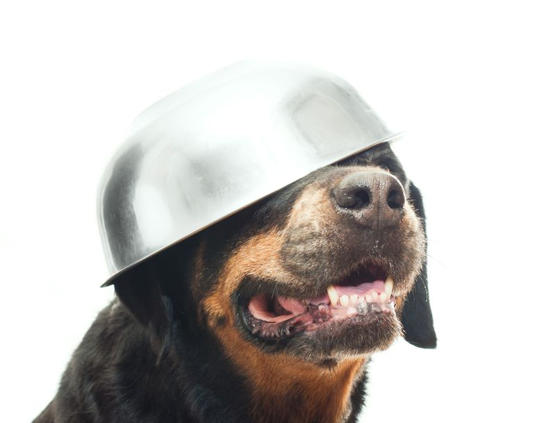 ciotola acqua cane