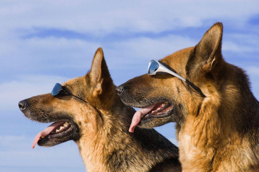 Pericolo colpo di calore nel cane