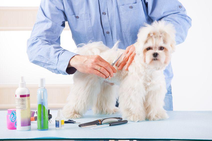 cura del mantello del cane