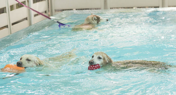 Vasca Da Bagno Per Cani Prezzi : Quando il cane ha paura del bagno
