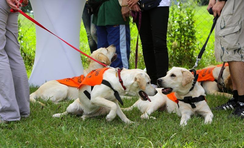 Qualita del cane per ciechi