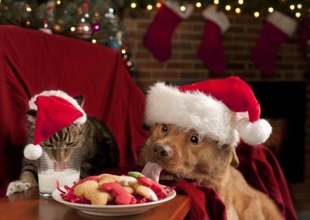 Natale sicuro con il cane: cibo