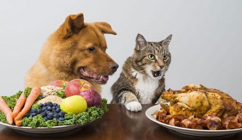Una buona dieta di qualità al cane