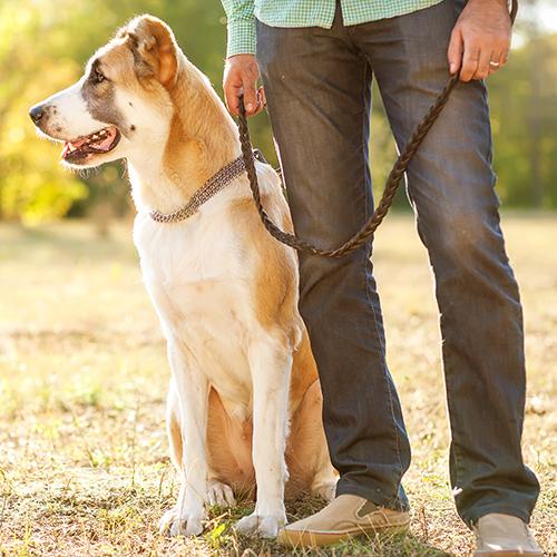 Mettere il guinzaglio al vostro cane