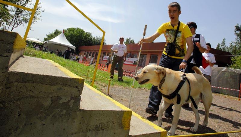 Addestramento cani guida